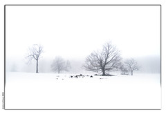 Snow and Fog (Insight Imaging: John A Ryan Photography) Tags: trees winter snow toronto ontario nature landscape march 2008 aficionados pentaxk10d justpentax goldenvisions wwwinsightimagingca johnaryanphotography