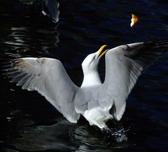 It's MINE !!! (Steve-h) Tags: ireland dublin orange white black yellow bread grey finepix fujifilm ststephensgreen naturesfinest steveh 35faves mywinners abigfave s9600 platinumphoto aplusphoto ultimateshot megashot theunforgettablepictures overtheexcellence theperfectphotographer hungrygull tup2