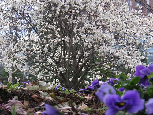 Sliver Spring Spring 3