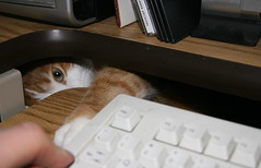 """Please can I have a Flickr account of my own?"" (recubejim) Tags: furryfriday thecatsmeow views300 7000views animalandia stonker lolcats diamondclassphotographer flickrdiamond kittycrownofgreatness pet100 pet2000 elreydemicasa kingofmyhome siamesecatsandbrothers siameseyadayyadayada flickrferalfriends snuzzilicious"