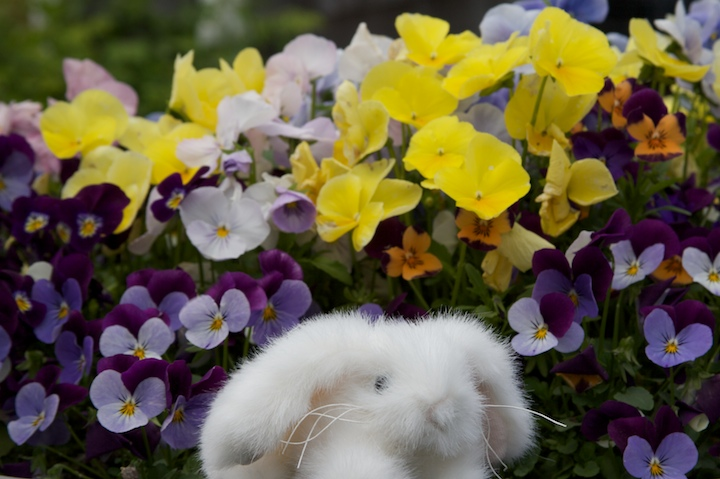 2476847165 ce8a2d41f8 o more flowers... and a bunny!