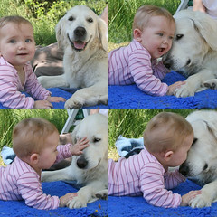 Best friends (Ingrid0804) Tags: dog baby cute love kids goldenretriever happiness precious tender bestfriends impressedbeauty babieswithoutborders