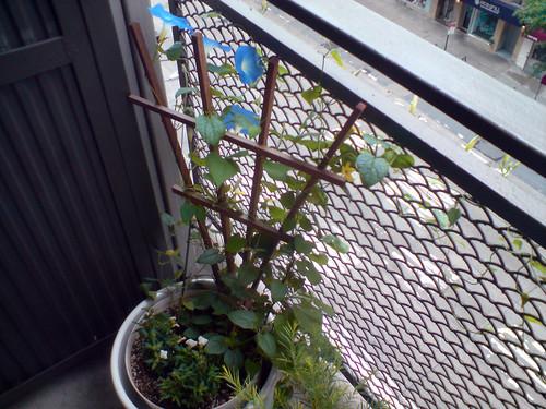 Balcony 2008 - new flowers