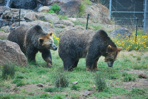 SF Zoo 063