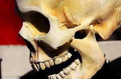 McCain's Vision for America (Robin Dude) Tags: usa flesh america skull washington election vision bellingham wa candidate republican fascism 2008 mccain election2008 ignorance neocon conservatism johnmccain corporatism senjohnmccain bushreich repugnican neoconservatism straighttalkexpress