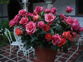 dozens-roses