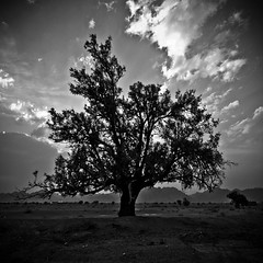 Desert Guard (Ageel) Tags: old trip travel trees sunset wild sky bw cloud white black tree art history hail clouds d50 square lens landscape photography big nikon desert squares wildlife fineart sigma kingdom wideangle explore saudi land sa 1020mm sq saudiarabia bnw squared ksa sigma1020mm     explored   ageel    bwsquare