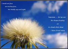 Wish... (Queenscents) Tags: blue sky white black macro nature sign flesh clouds wind quote details frame wish dandy dandellion tomorrowletmysunhisbeamsdisplay