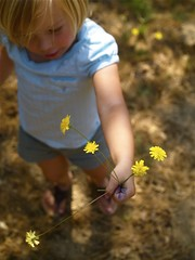 gathering - sonoma (Yorktown Road) Tags: life family flowers love yellow weeds holding hand sweet sonoma gift gathering bunch picking generosity visitwithkp