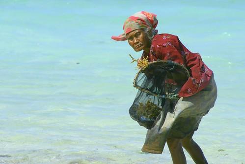 seaweed gatherer