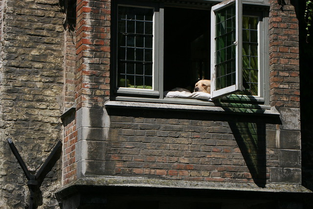 the most famous dog in bruges