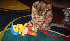 20071225 - Christmas Day - 146-4637 - Beavis playing with Milhouse (Rev. Xanatos Satanicos Bombasticos (ClintJCL)) Tags: christmas holiday playing television animal cat toy virginia tv cartoon simpsons entertainment tvshow thesimpsons cartoons 2007 stafford laying milhouse momanddadshouse christmas2007 cartoonshow 200712 20071225 beavisthecat