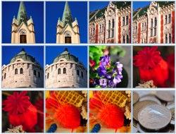 Nikon D300 plus Nikkor 60mm f/2.8G AF-S ED Micro-Nikkor gallery at LensBuyersGuide.com