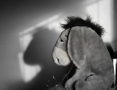 Eeyore has a grey day, no surprise there. eeyore in explore #209 on 7.8.08 RoFL! (photocillin) Tags: outside sadness grey day prozac explore hahahaha eeyore raining razorblades mournful explored blackwhitephotos notveryhow otobeinenglandinthprain