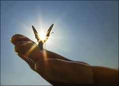 To fly with the angels!! (adrians_art) Tags: blue sky nature wings hands wildlife silhouettes butterflies insects humans sunbursts artlibre anawesomeshot aplusphoto