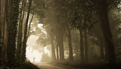 The Mystery of the Visible (Lus C) Tags: mist tree portugal forest sunrise dawn sintra biosphere peninha deforestation kyotoprotocol photographia pprowinner thesecretlifeoftrees sustainableforestmanagement carbonoffsetprogramme