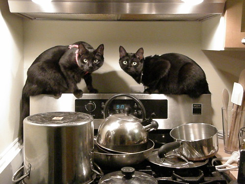 070907 cats cooking