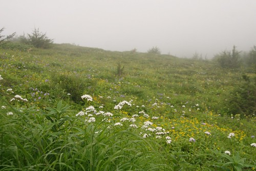 Foggy Field of Flowers