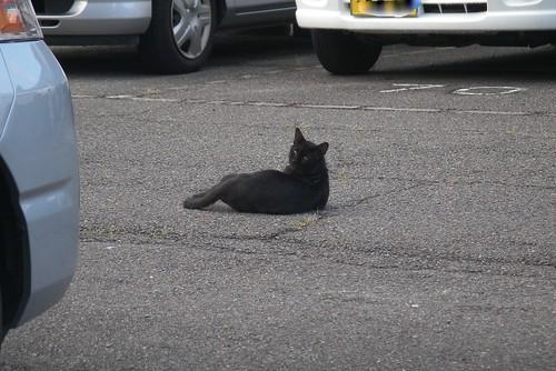 見かえり黒猫