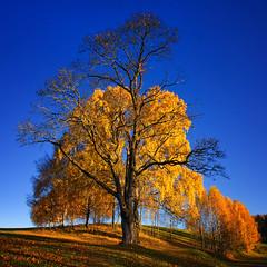 Autumn Leaves (Krogen) Tags: autumn oktober norway landscape norge norwegen noruega scandinavia akershus høst romerike krogen landskap noorwegen noreg ullensaker skandinavia mft nordbytjernet olympuse3 zuikodigital918mm