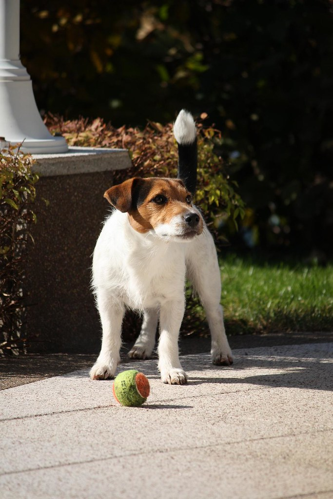 Throw the ball