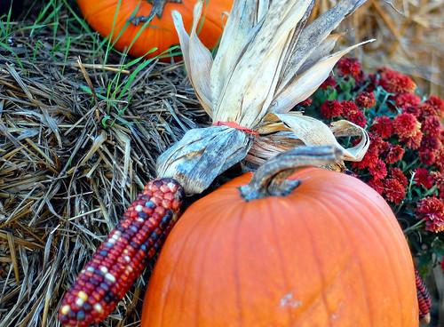 Corn, pumpkin & mums