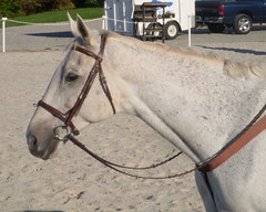 Holly's new grey (Spoiledhorse) Tags: horses riding ridinglessons equestrian horsebackriding foxhunting foxhounds centralpennsylvania horsetrailers beauforthunt harvestviewstables juniorhunt