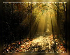 Sonnenstrahlen eingefangen (Harald52) Tags: herbst creativecommons sonne wald strahlen supershot mywinners goldmedalwinner colorphotoaward ultimateshot favemegroup3 digitalphotoart favemegroup7 theunforgettablepictures platinumheartaward goldstaraward spiritofphotography magicdonkeysbest obq 100commentgroup hairygitselite