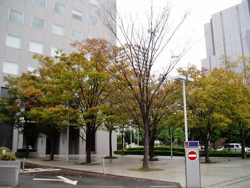 你拍攝的 梅田街道。