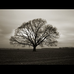 november wind (Paul Petruck) Tags: longexposure autumn bw tree nature landscape wind blacknwhite seenintheinterestingnessarchives landscapesofvillagesandfields