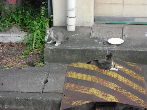 扇町駅の猫/Cats in Ogimachi station