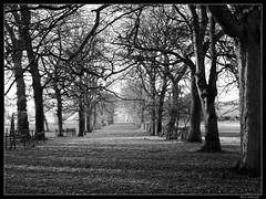 Winters day at Levens Hall (obers82) Tags: trees winter blackandwhite white snow black cold ice blackwhite lancashire cumbria kendal milnthorpe levenshall levens aplusphoto