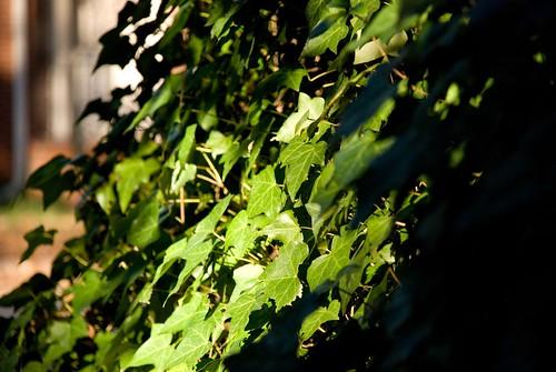 simple holidays :: ivy