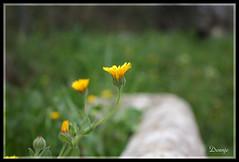 Primavera (Doenjo) Tags: espaa geotagged sevilla andaluca pueblos constantina sierranorte canoneos450d doenjo lmdd