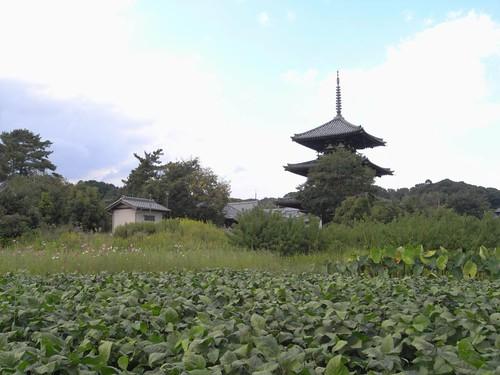 法起寺三重塔とコスモス-09