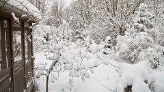 Winter Storm-1.jpg by edseloh on Flickr!