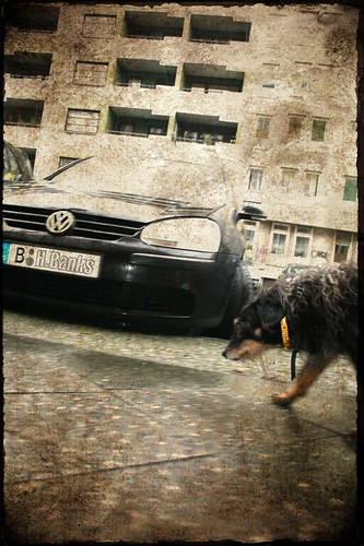 Dog-passing-By