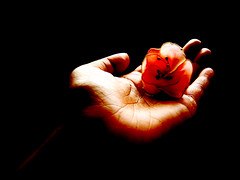 tribute (Su-tåpa) Tags: orange flower hand fingers peach palm tribute cracks mystic platinumphoto deeplines