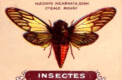 insecte 21