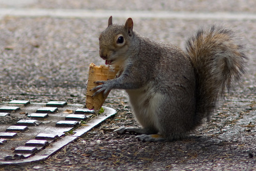 A Squirrel Eating An Ice Cream