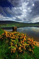 Yellow Heather (Suddhajit) Tags: uk landscape scotland edinburgh pentlandhills sigma1020 vob threipmuir canon400d aplusphoto