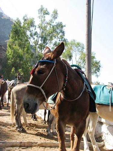辛苦的驢子們 (2)
