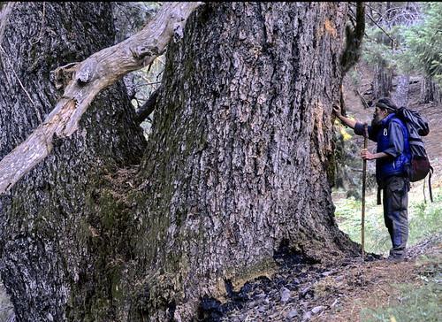 """Lou with the """"Grandma & Grandpa"""" Tree"""