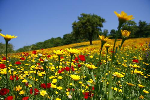 Benessere e primavera