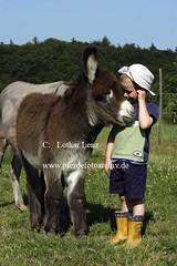lz280704(51) (Lothar Lenz) Tags: deutschland esel 56812dohr