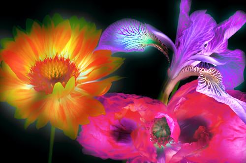 Do Flowers Dream?