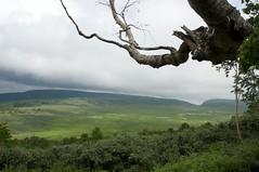 雲の影が走る湿原