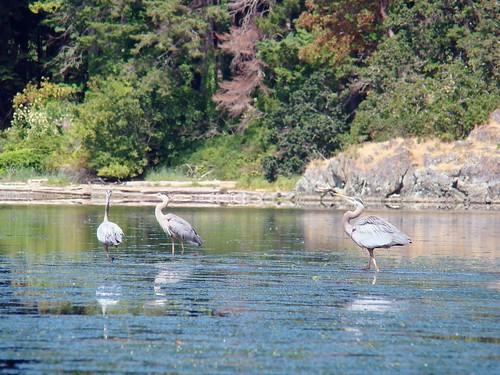 2008-07-03 Esquimalt 427