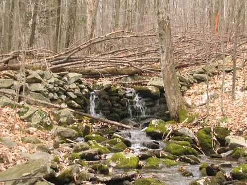 Tree and stone dam