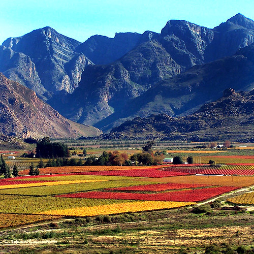 Autumn in South Africa II